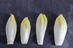 Endive Cichorium endivia with beautiful soft green leaves,aligned on slate table. Royalty Free Stock Images