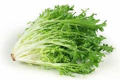 Endive leaves. Bunch of endive leaves in isolated white background Royalty Free Stock Photo