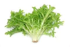 Endive leaves Stock Images