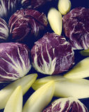 Endive & Radicchio. Fresh endive and radicchio shot from above Royalty Free Stock Image