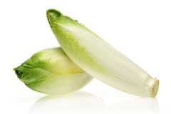 Endive Royalty Free Stock Photos