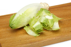 Endive Stock Image