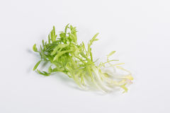 Endive on white background. Some of endive, on white background stock photography