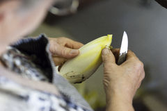 Endives being cleaned Royalty Free Stock Photography