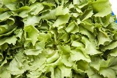 Endives salad Stock Photos