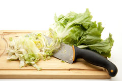 Endives salad cut Royalty Free Stock Photo