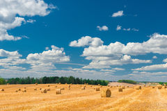 Endless beautiful of gold color the field Royalty Free Stock Photo