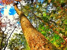 Endless beauty. The beauty of nature seems endless as you look up to the sky Stock Photo