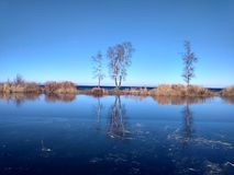 Endless blue of autumn in Siberia. Endless blue autumn in Siberia. in the swamp ice the reflection of birch trees. silence royalty free stock images