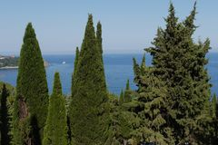 The endless blue sea is visible between the tops of green pines. For your design royalty free stock images