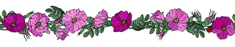 Endless Brush Border with Wild Roses. Summer Flowers Greeting Card or Wedding Background. Hand Drawn Illustration. Doodle Style. Endless Brush Border with Wild Royalty Free Stock Photo