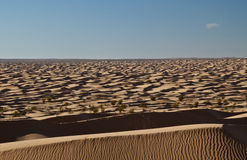 Endless desert...Sahara Royalty Free Stock Images