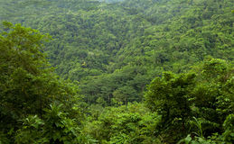 Endless expanse lush vivid tropical jungle, Costa Rica Royalty Free Stock Image