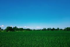 An endless field, blue sky, spring day. stock images