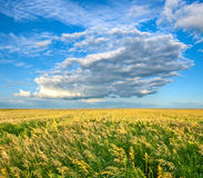 Endless field under beautiful skies Stock Photos