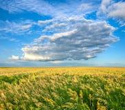 Endless field under beautiful skies stock photos