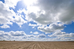 Endless fields Stock Images