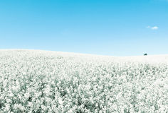 Endless fields in blue white cold tones Royalty Free Stock Photo