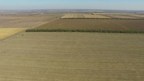 Endless fields after the harvest wheat crop. Aerial view stock video