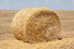 Endless fields of hay bails. Agricultural fields of hay bails royalty free stock photography