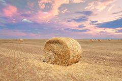 Endless fields of hay bails. Agricultural fields of hay bails stock photography