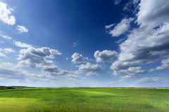 Endless fields of wheat crop in early spring Royalty Free Stock Photos