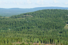 Endless forest Royalty Free Stock Images