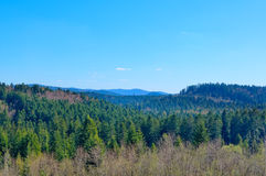 Endless forests. Of the Carpathian mountains. Nature landscape royalty free stock photo