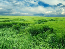 Endless green field Royalty Free Stock Image