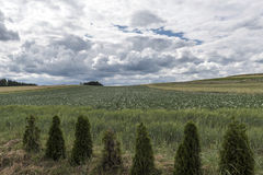 Endless green field under stormy dark clouds Royalty Free Stock Image