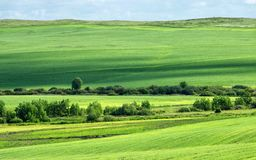 Endless green meadows and fields. Trees, grass and growns Royalty Free Stock Image