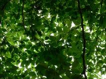 Endless Greens Royalty Free Stock Photo