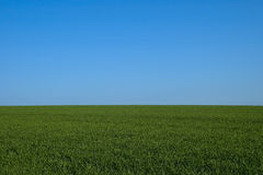 Endless horizon. Green grass against bright blue sky. horizon royalty free stock images