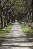 Endless Path Royalty Free Stock Images