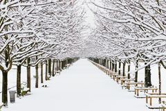 Endless path covered with white pure snow in paris royalty free stock photos