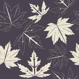 Endless pattern with maple leaves on purple background Stock Image