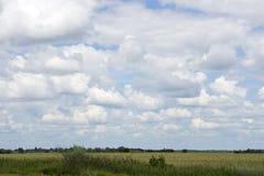 Endless plain Hungary Royalty Free Stock Image