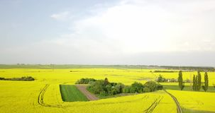 Endless rapeseed field fron the bird eye view. field. Yellow rapeseed fields and blue sky with clouds in sunny stock footage