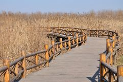 Endless road. In dry reeds Stock Photo