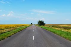 Endless road through a blooming meadow on a Sunny day stock photography