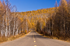Endless road in the forestry. With blue sky, Hulunbuir, China stock images