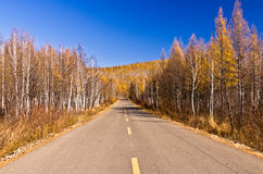 Endless road in the forestry Stock Image