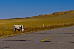 Endless road in the grassland Royalty Free Stock Photo