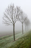 Endless row of trees in the mist Stock Images