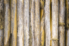 Bamboo Plants Texture Royalty Free Stock Image