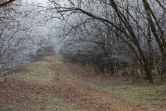 Endless trail in a winter forest Stock Photography