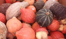 The Endless varieties of Fruits and vegetables Royalty Free Stock Photos