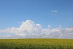 Endlose Felder von Canola Stockbilder