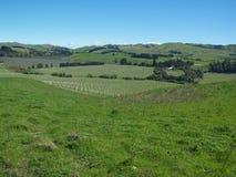 Endlose grüne Landschaft und Weinkellerei in NZL stockbild
