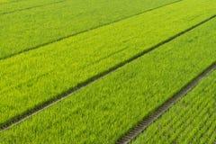Endlose Reis-Felder Stockfoto